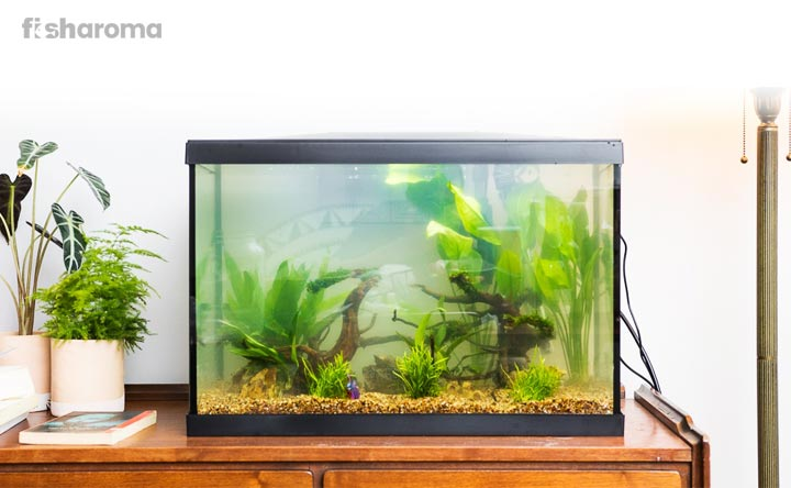 How to avoid aquarium mistakes for beginners