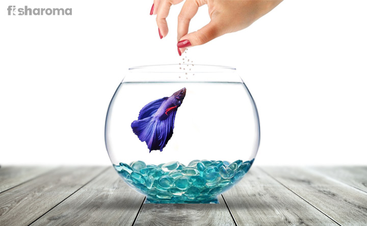 Betta Fish Food - A Diet Plan