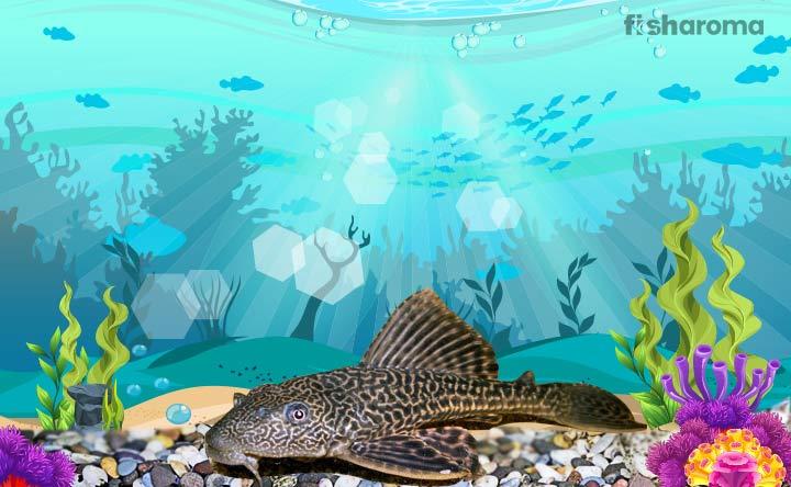 Bristlenose Pleco - Care Guide for the Peaceful Aquarium Fish