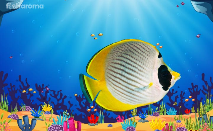 Butterfly Fish - The Flowery Beauty of Sea