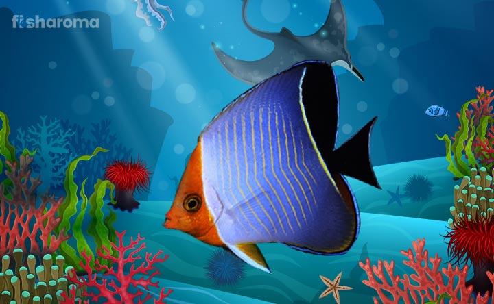 Butterflyfish - The Marine Wonder