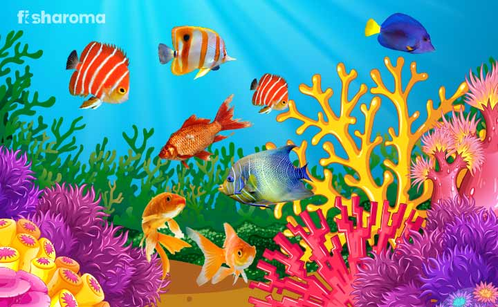 Colorful Fish for Aquarium