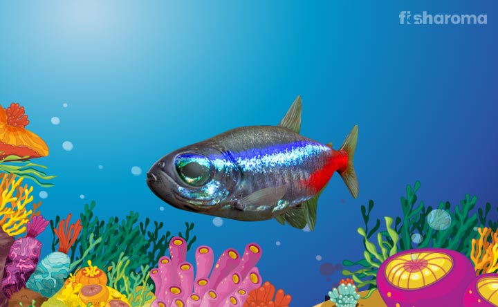 Diamond Neon Tetra - The Shinning Bliss of Water