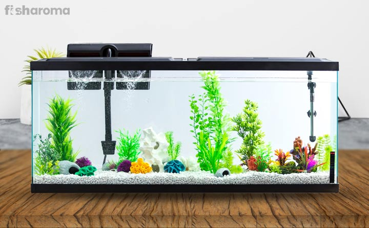 A guide to set up a fish tank