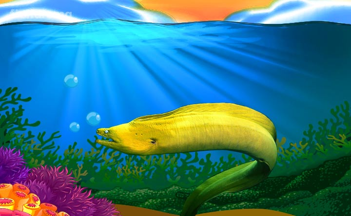 Saltwater Species - Moray Eel