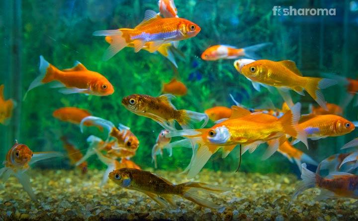 Reasons to keep fish tank