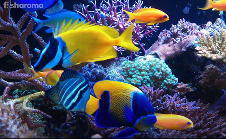 Beginner-Friendly Saltwater Fish