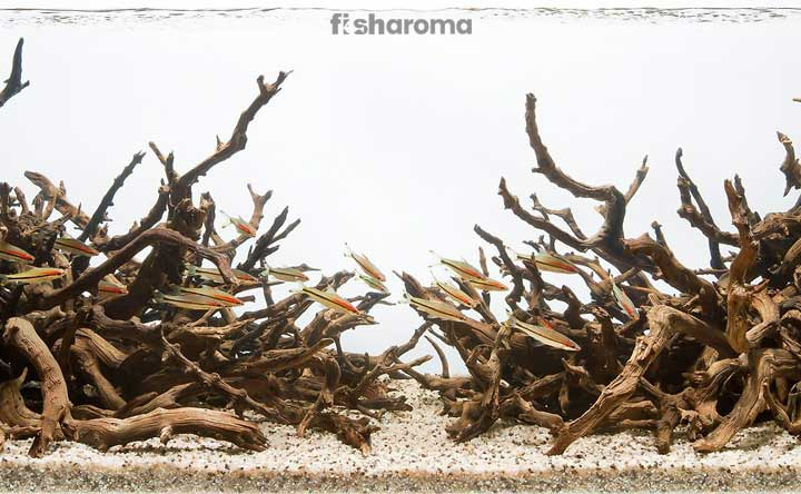 Thorny Trees Which Should Not be Put in a Fish Tank