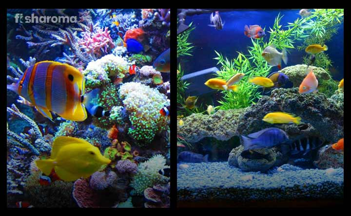 Saltwater vs. Freshwater Aquarium