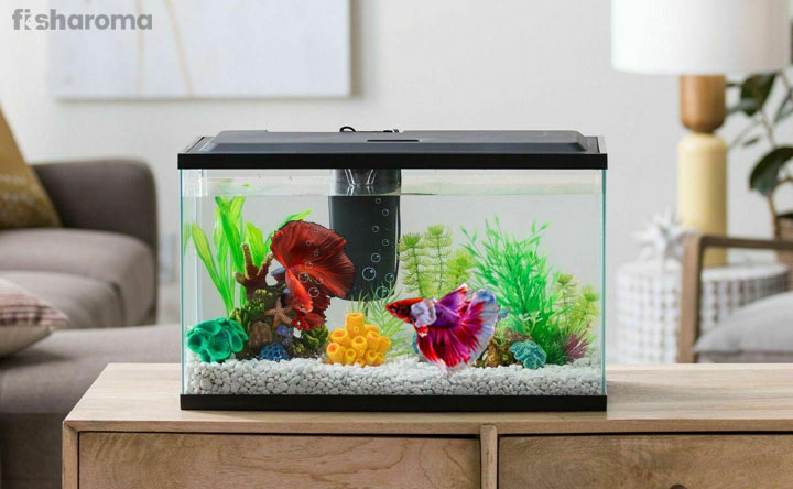 Best Betta Fish Tank - A Guideline