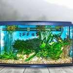Plants for Your Aquarium