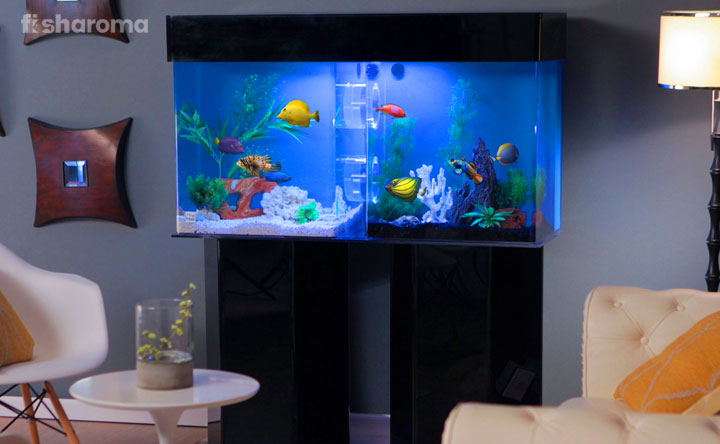 10 Best Aquarium Stands That Will Save