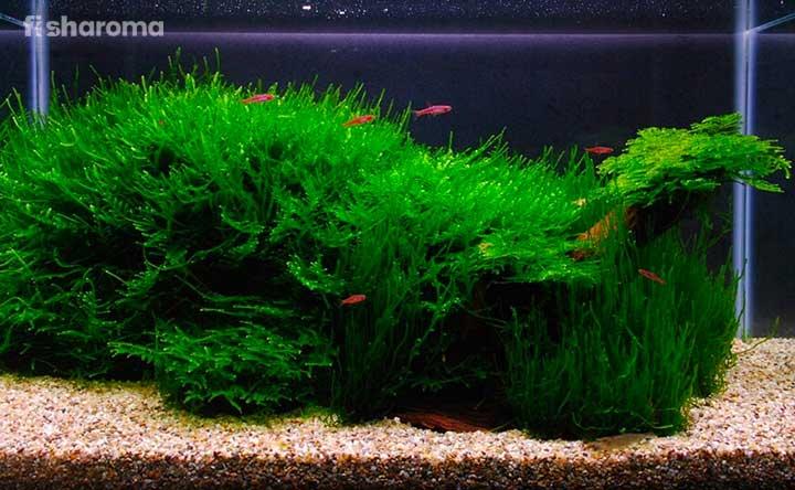 live plants for your planted aquarium