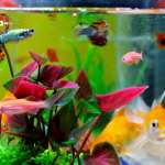 22 Coolest Fish for Aquarium