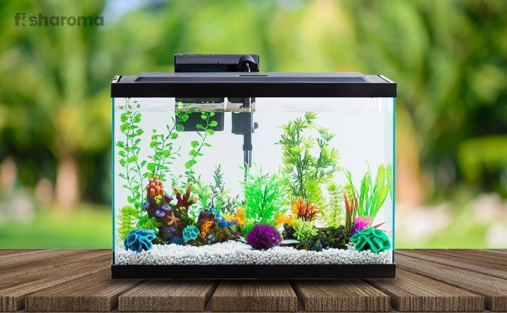 10 Gallons Fish Tank Simple Diys To Set An Aquarium
