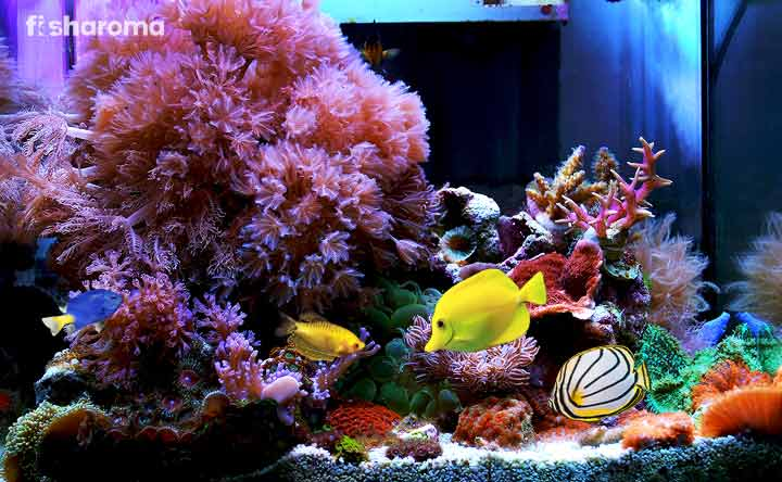 How to Set Up a Saltwater Aquarium? (Complete Set-Up Guide)