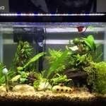 20-Gallon Fish Tank Guide