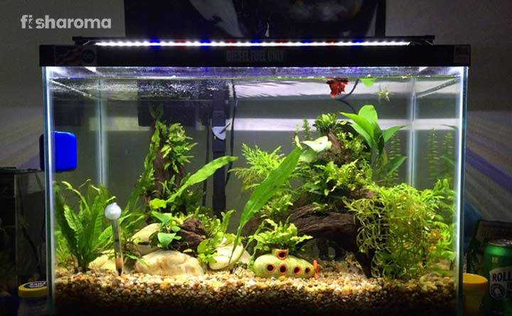 20 Gallon Fish Tank A Detailed Review