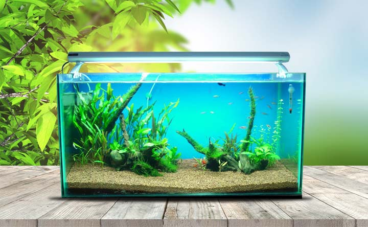 75-Gallon Tank Guide