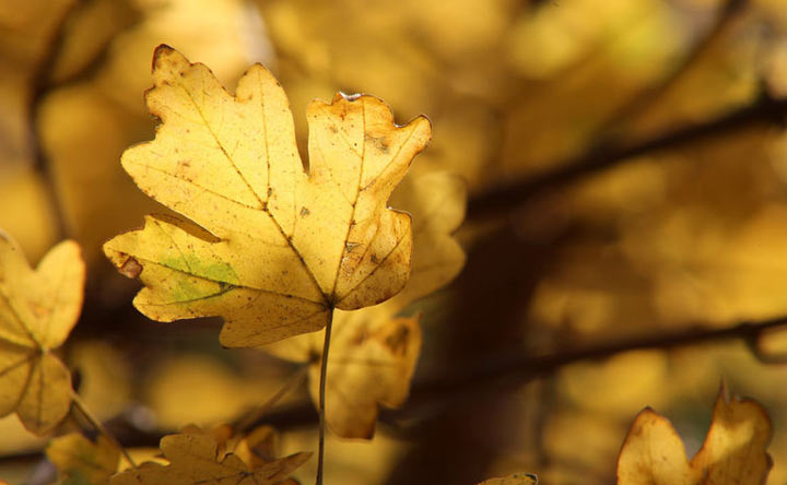 Brown Leaves by Sun Grow