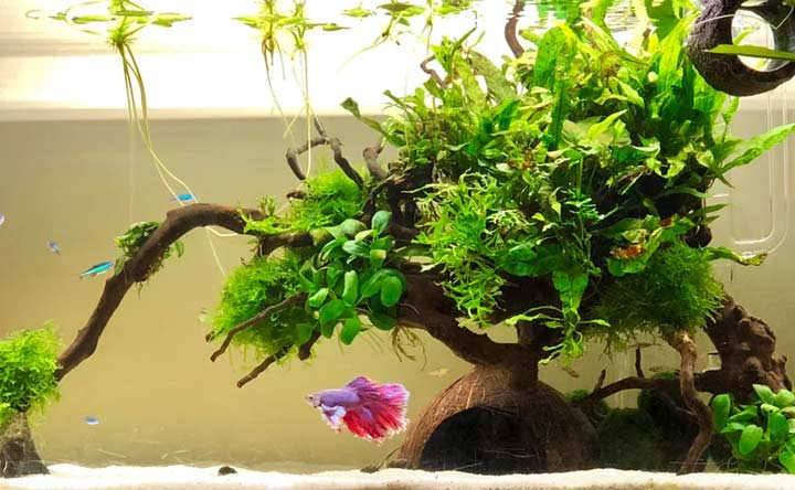Coconut Caves for Betta Fish Tank