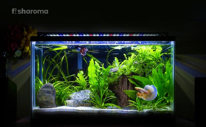 Plants_for_Betta_Fish